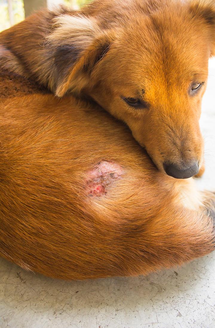 Resultado de imagen para piel perros